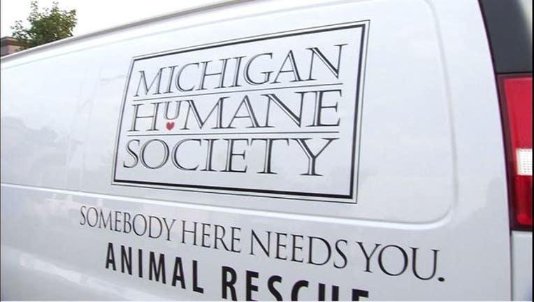 1a8a0847-wjbk-michigan humane society-052119_1558465129822.JPG-65880.jpg