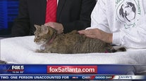 Pet of the Day Humane Society of Cobb County
