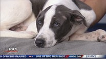 Pet of the Day from the Carroll County Human Society