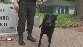 DeKalb County Police K-9 recovering after shooting