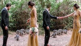 Family of raccoons make SF couple's wedding photo shoot even more memorable