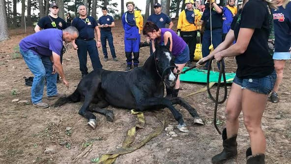 Cobb County firefighters help rescue horse