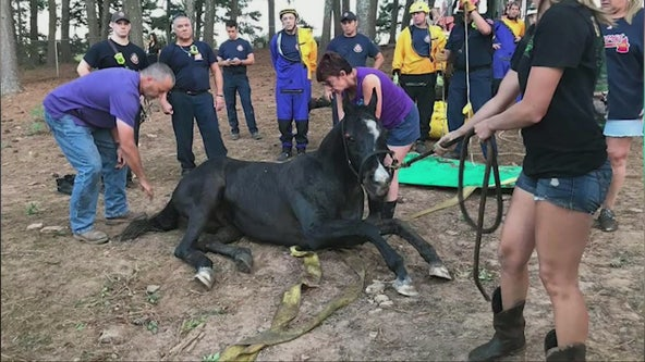 Firefighters help horse