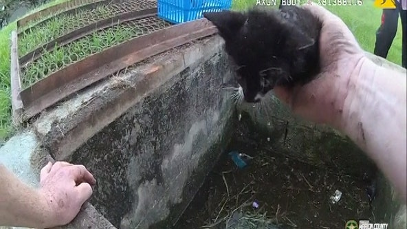 Kittens saved from a soggy nightmare