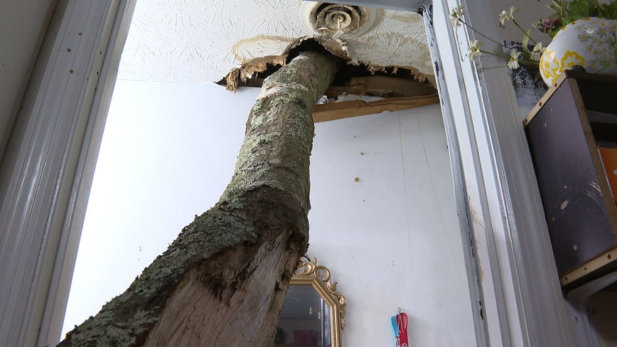 Tree limb crashes through roof of Forest Park couple's home