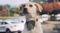 Meet LaGrange police's newest recruit