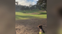 San Francisco police discover body of infant near Lincoln Park Golf Course