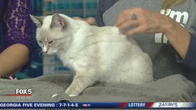 Pet of the Day: November 29, 2019