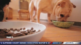 FDA warns dog owners about possible link between heart condition, grain-free dog food