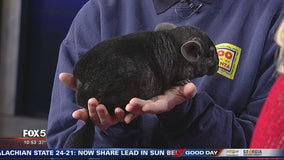 Pet of the day from Zoo Atlanta