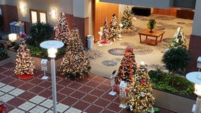 Charities 'stump' for votes at Festival of Trees