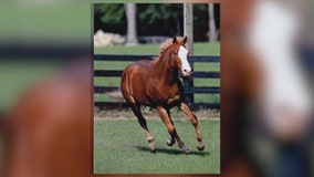 Deputies investigate horse mutilation near Ocala