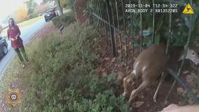 Deputies rescue deer in distress