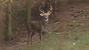 'The rut is on.' Georgia sheriff warns drivers about deer