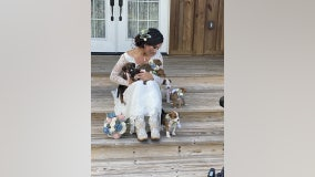 Bride includes puppies in her wedding to help them get adopted