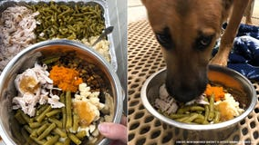 Shelter pets served Thanksgiving meals — complete with turkey, yams and green beans