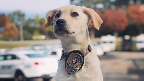 Meet LaGrange police's newest recruit