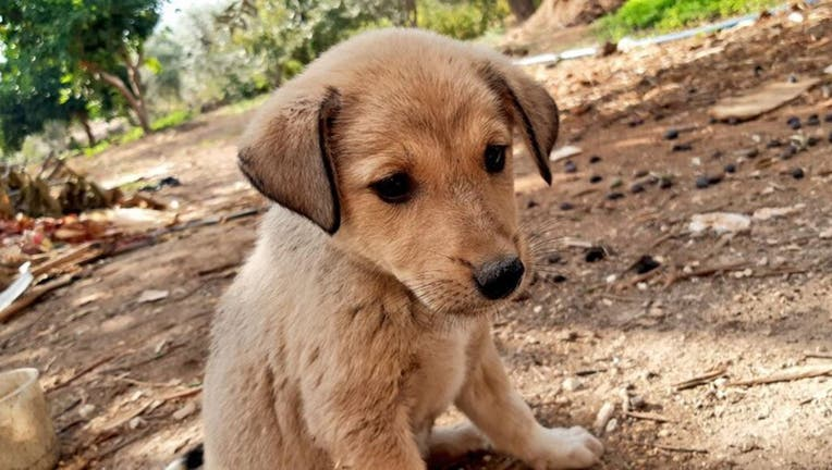 A young puppy orphaned in U.S. military operation that killed ISIS leader Abu Bakr al-Baghdadi last Saturday has been rescued and reportedly adopted into a fur-ever home. (Fared Alhor)