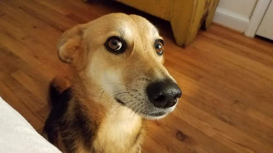 Dog waits for food.