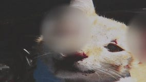 Man sentenced to 6 years in prison for killing girlfriend's cat because she wanted to leave