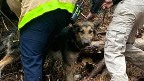Bartow County firefighters rescue dog from cliff