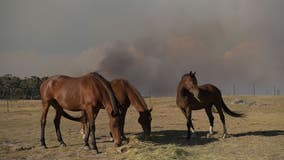 Authorities find at least 15 horses fatally shot in Kentucky