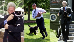 Checkers, Drunkard, Barney, Bo: Presidential pets have inhabited the White House since its beginning