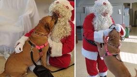 Dog at shelter for 900+ days asks Santa for forever home