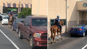 Pinellas Park police horse goes through Starbucks drive-thru line