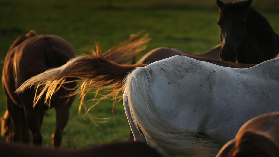 Horses-file-GETTY.jpg
