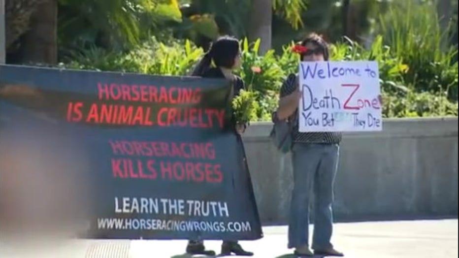 animal-protest.jpg