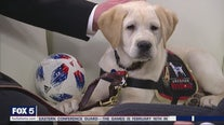 Atlanta United introduces new service dog in training