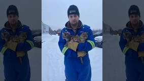 Man rescues freezing kittens stuck to ice by pouring coffee on them