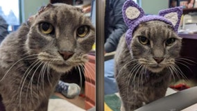 Cat with crochet ears finds forever home