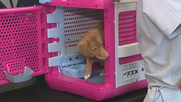 Delta unveils new 'CarePod' pet travel carriers