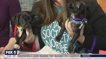 Pet of the Day: February 26, 2020