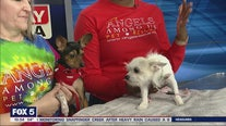Pet of the Day: February 25, 2020