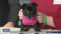 Pet of the Day: February 19, 2020
