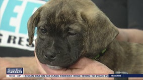 Pet of the Day: February 28, 2020