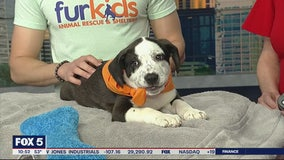 Pet of the Day: February 18, 2020