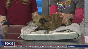 Pet of the Day: February 27, 2020