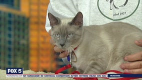 Pet of the Day: February 17, 2020