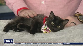 Pet of the Day: February 12, 2020