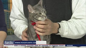 Pet of the Day: February 10, 2020