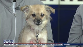 Pet of the Day: February 21, 2020