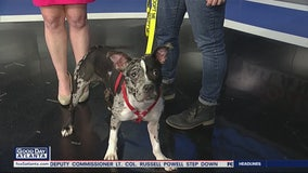 Pet of the Day: February 14, 2020