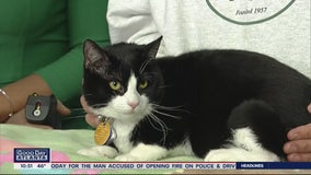 Pet of the Day: February 24, 2020