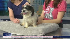 Pet of the Day: February 11, 2020