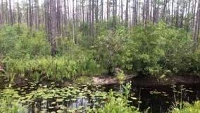 New plan shrinks proposed mine near Okefenokee Swamp refuge