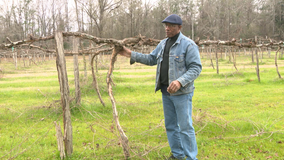 African Americans making their mark in the wine industry